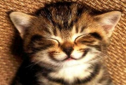 Gato-sonriente